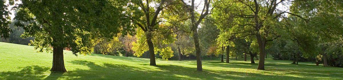 Dave's Lawn & Garden